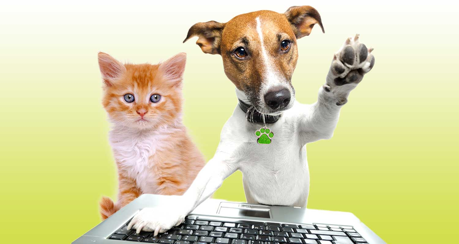 Pet news, pet advice advice and tips for dogs and cats